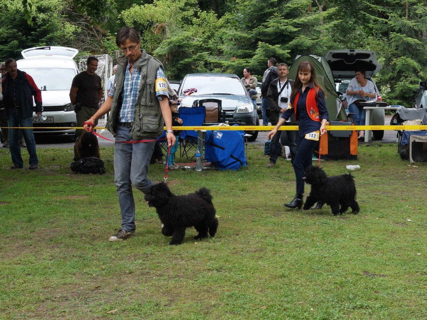 Ipolyréti Vidám Csárdás (elől), fekete kan-black male/ minor puppy/ Nagyon ígéretes-Very promising 2.