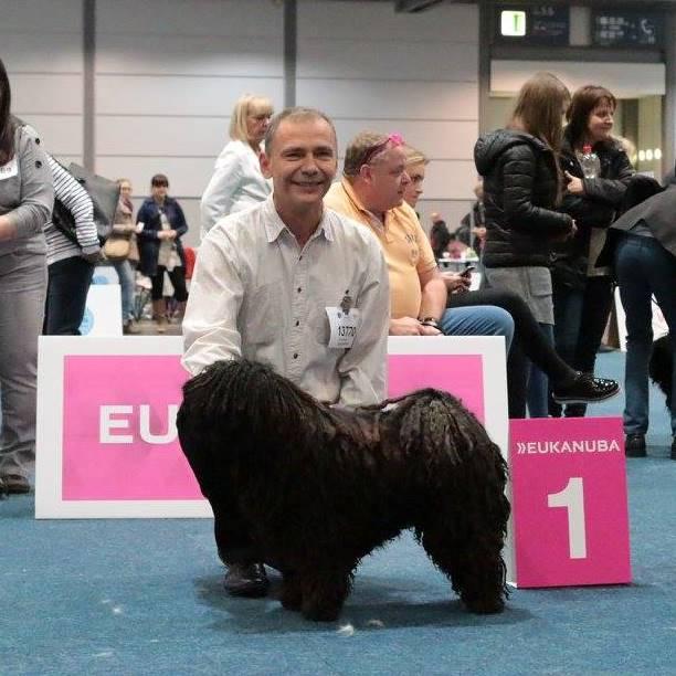 Lipcse, World Dog Show 2017 - nyílt osztály K1, VDH-CAC